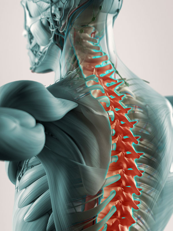 osteo-muscular-graphic-vertical Home  Cummings Chiropractic at Stover Wellness