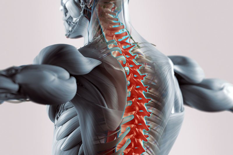 Cumming Chiropractic at Stover Sports Injury and Wellness Cold Laser Therapy osteo-muscular-graphic